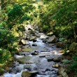 Beautiful mountain river — Stock Photo
