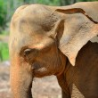 Elephant photo closeup - Lizenzfreies Foto