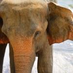 Elephants — Stock Photo #17878341