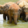 Elephants — Stock Photo #17878347