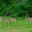 Herd of deer — Stockfoto