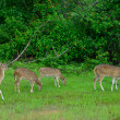 Herd of deer - Stock Photo