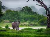 Elephant in the wild — Stock Photo