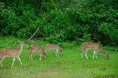Herd of deer — Stock Photo