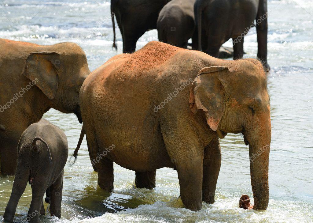大象 动物 牛 1024