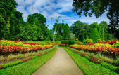 A beautiful alley in the Park with exotic plants — Stock Photo