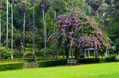 Park with exotic plants — Stock Photo