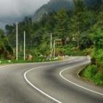 route vers les montagnes. brouillard au-dessus de forêt — Photo