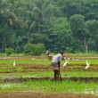 Manual work of the man on the rice field — Stock Photo #19272953