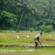 Manual work of the man on the rice field — Stock Photo #19272957