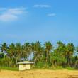 椰子の木 々の間ビーチの小さな家 — ストック写真