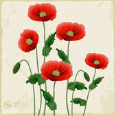 Red poppies on a white background. — Stock Vector