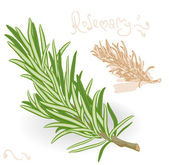 Rosemary twig on white background. — Vecteur