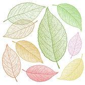 Colored vector leaf skeletons. — Stock Vector