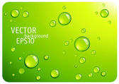 Clear green water drops. — Stock Vector