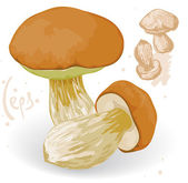 Vector ceps on a white background. — Stock Vector