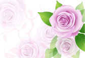Pink vector roses on the white background — Stock Vector