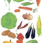 Vector set of 14 fresh vegetables. — Stock Vector #45151839
