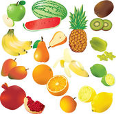 Vector set of 14 fresh fruits. — Stock Vector