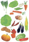 Vector set of 14 fresh vegetables. — Stock Vector