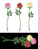 Roses. Vector. — Stock Vector