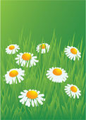 Camomiles in the grass — Stock Vector
