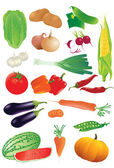 Vector set of raw vegetables. — Stock Vector