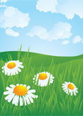 Daisyes in meadow. — Stock Vector