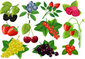 Vector berries huge collection. — Stock Vector