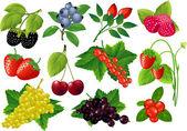 Vector berries huge collection. — Stock Vector