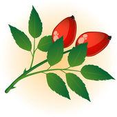 Dog rose. — Stock Vector