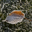 Frost-covered leaf in November — Stock Photo