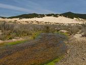 Piscinas, dünenlandschaft an der costa verde, südwestlichen sardinien, italien, europa — Stockfoto