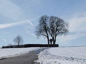 Chestnut tree in winter (Aesculus hippocastanum), Bad Iburg-Glane, Osnabruecker Land, Lower Saxony, Germany, Europe — Stock Photo