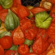 Bladder cherry, Chinese lantern, Japanese lantern, Winter cherry (Physalis alkekengi) — Stock Photo
