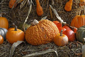 Pumpkins in autumn, Germany — Stock Photo