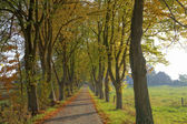 Lime grove in autumn in Lower Saxony, Germany, Europe — Stock Photo
