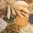 Royalty-Free Stock Photo: Assorted edible seeds with wheat Assorted edible seeds with wheat