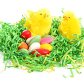 Easter chicks with a colourful clutch of eggs — Stock Photo
