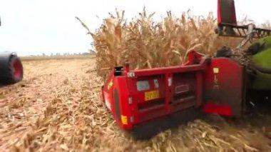Thresher harvesting maize — Stock Video