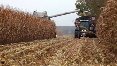 Thresher harvesting maize for silage — Stock Video