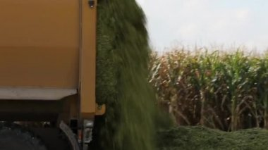Tractor harvesting maize or corn — Stock Video