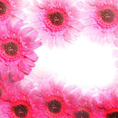 Colourful pink flower border colorful flower — Stock Photo
