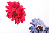 Red and purple flower — Stock Photo