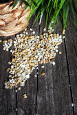 Maize grain — Stock Photo