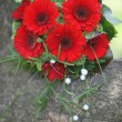 Floral bouquet with red gerbera daisies — Stok fotoğraf