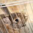 Bunny rabbit in a cage — Stock Photo