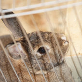 Bunny rabbit in a cage — Foto de Stock