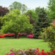 Colourful spring garden — Stock Photo