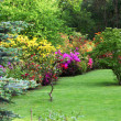 Colourful flowering shrubs in a spring garden — Stock Photo
